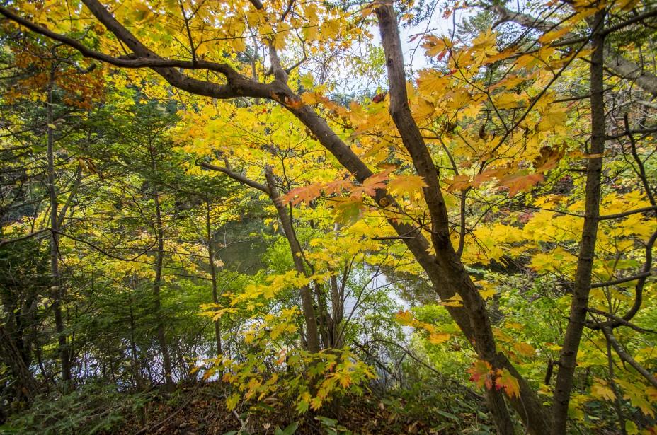 今日の気比の森・お池様